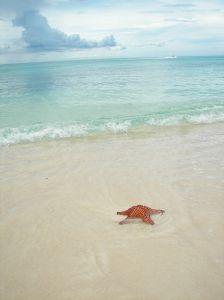 hypnosis-sea-star-1109602-m